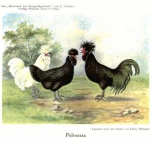 Aquarell von Polveraras in Buch A.Arbeiter von 1914