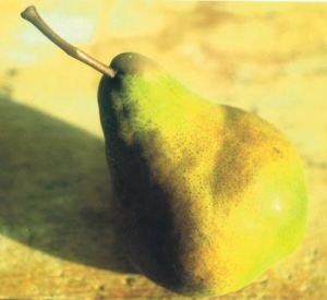 Bella Angevina, fonte: P. Odorizzi: Profumi e sapori perduti - Il fascino della frutta antica Vol.II (2005)