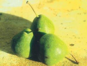 Bergamotta di Occhieppio, fonte: P. Odorizzi: Profumi e sapori perduti - Il fascino della frutta antica Vol.II (2005)