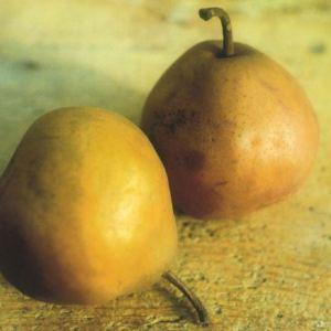 Brutta e Buona Autunnale, fonte: P. Odorizzi: Profumi e sapori perduti - Il fascino della frutta antica Vol.II (2005)
