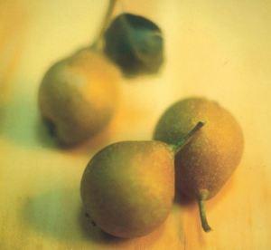 Buona Grigia, fonte: P. Odorizzi: Profumi e sapori perduti - Il fascino della frutta antica Vol.II (2005)