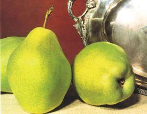 Butirra d'Hardenpont, fonte: P. Odorizzi: Profumi e sapori perduti - Il fascino della frutta antica Vol.II (2005)