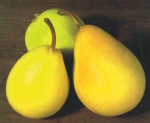 Coscia, fonte: P. Odorizzi: Profumi e sapori perduti - Il fascino della frutta antica Vol.II (2005)