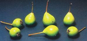 Cristofoline, P. Odorizzi: Profumi e sapori perduti - Il fascino della frutta antica Vol.II (2005)