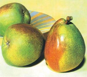 Decana d'Inverno, fonte: P. Odorizzi: Profumi e sapori perduti - Il fascino della frutta antica Vol.II (2005)