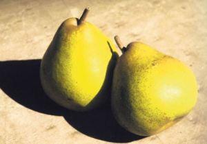 Decana del Comizio, fonte: P. Odorizzi: Profumi e sapori perduti - Il fascino della frutta antica Vol.II (2005)