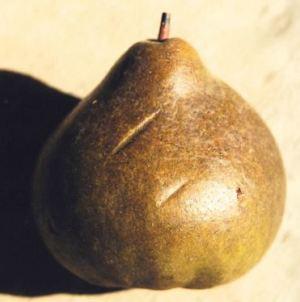 Ducale, fonte: P. Odorizzi: Profumi e sapori perduti - Il fascino della frutta antica Vol.II (2005)