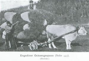Engadiner-Graueli; Quelle: Postkarte