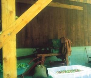 Fabbricazione del sidro, fonte: P. Odorizzi:  Profumi e sapori perduti - Il fascino della frutta antica Vol. II  (2005)