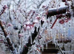 Frostberegnung in Südtirol. Quelle: http://www.tageszeitung.it/; Siegfried Unterkircher