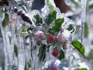 Frostberegnung