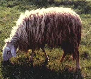 Garessina (www.agraria.org)