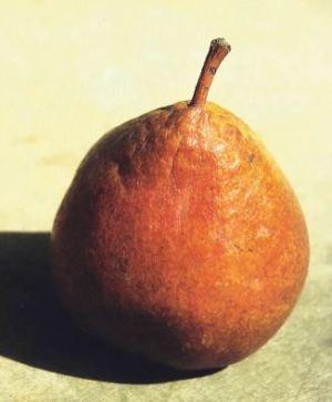 Gran Duca, P. Odorizzi: Profumi e sapori perduti - Il fascino della frutta antica Vol.II (2005)