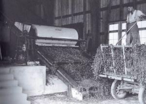 Grastrocknungsbetriebe erlebten in den 1950er Jahren einen grossen Aufschwung; Quelle: Kartoffeln, Klee und kluge Köpfe (2009)