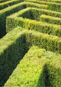 Hecken als lebender Zaun, Quelle: Henrik Gerold Vogel  / pixelio.de