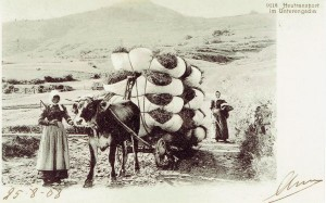 Heutransport Unterengadin 1908 (Postkarte)
