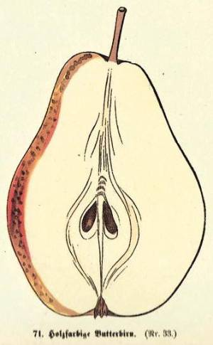 Holzfarbige Butterbirn, Quelle: Iglhauser B., Keser M. (1998): Pirarium.