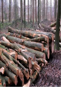 Holzschlag, Quelle: Joujou / pixelio.de