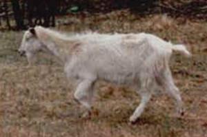 Istrania (www.agraria.org)