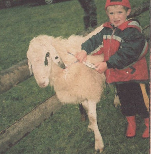 Jezersko-solcavska ovca (Sl Jezersko-Solcava Sheep Breeders Association)
