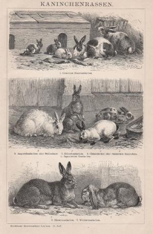 Rabbit Breeds; Brockhaus 1902; www.seidenhase.de