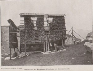 Dr. P.K. Hager: Kornhisten in Graubünden (Switzerland)1916