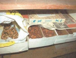 Lagerung von getrockenen Ackerbohnen, Quelle: Erfahrungen über Lokalsorten traditioneller Kulturarten in Osttirol (2006), Foto: Peter Blauensteiner 2005