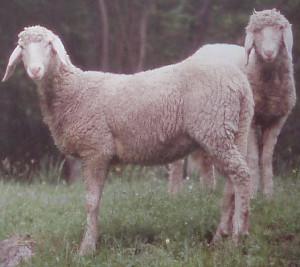 Livio (www.agraria.org)