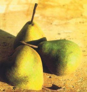 Madernassa, fonte: P. Odorizzi: Profumi e sapori perduti - Il fascino della frutta antica Vol.II (2005)
