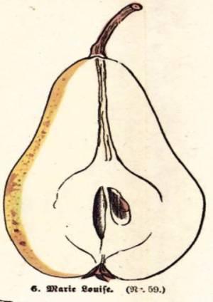 Marie Louise, Quelle: Iglhauser B., Keser M. (1998): Pirarium.