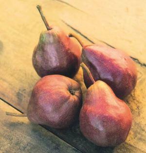 Max Red Bartlett, fonte: P. Odorizzi: Profumi e sapori perduti - Il fascino della frutta antica Vol.II (2005)