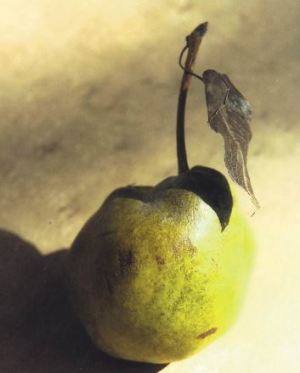 Mora di Faenza, fonte: P. Odorizzi: Profumi e sapori perduti - Il fascino della frutta antica Vol.II (2005)