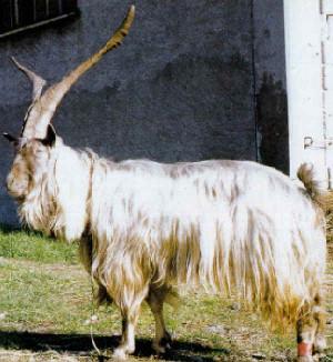 Orobica (www.agraria.org)