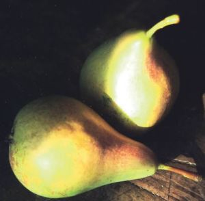 Pera Bertagnolli, fonte: P. Odorizzi: Profumi e sapori perduti - Il fascino della frutta antica Vol.II (2005)
