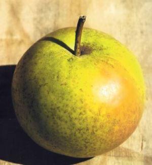 Pera Mela, fonte: P. Odorizzi: Profumi e sapori perduti - Il fascino della frutta antica Vol.II (2005)