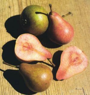 Pera del Sangue, fonte: P. Odorizzi: Profumi e sapori perduti - Il fascino della frutta antica Vol.II (2005)