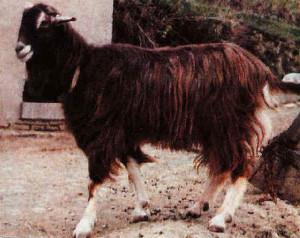 Roccaverano (www.agraria.org)