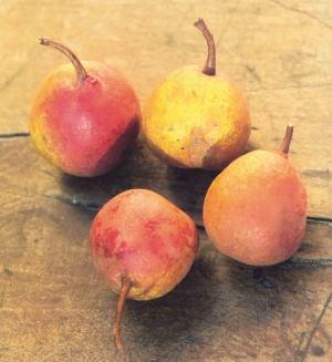Rosselletta Piccola, fonte: P. Odorizzi: Profumi e sapori perduti - Il fascino della frutta antica Vol.II (2005)