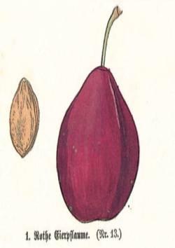 Rothe Eierpflaume, Quelle: Iglhauser B., Keser M. (1997): Prunarium.