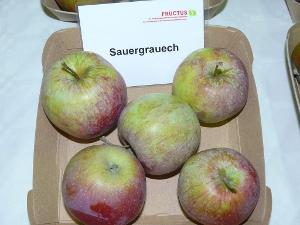 Sauergrauech; Quelle: http://www.pomologie.com