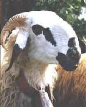 Savoirada (www.agraria.org)