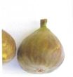 Schawerda (Brown Turkey), Quelle: H. Pirc: Enzyklopädie der Wildobst- und seltenen Obstarten