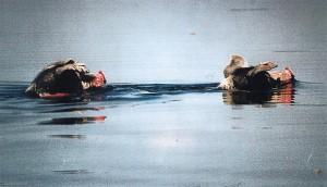 Schwimm-Turopoljer (Foto Goran Gugic)