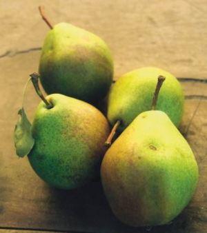 Sorbetto, fonte: P. Odorizzi: Profumi e sapori perduti - Il fascino della frutta antica Vol.II (2005)