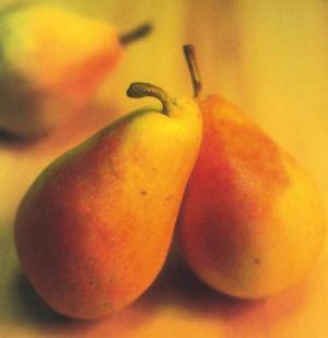 Spadona Estiva, fonte: P. Odorizzi: Profumi e sapori perduti - Il fascino della frutta antica Vol.II (2005)