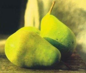 Spadona d'Inverno, fonte: P. Odorizzi: Profumi e sapori perduti - Il fascino della frutta antica Vol.II (2005)