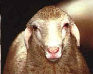 Tacola (www.agraria.org)