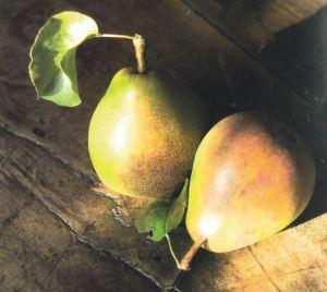 Testa di Gatto, fonte: P. Odorizzi: Profumi e sapori perduti - Il fascino della frutta antica Vol.II (2005)