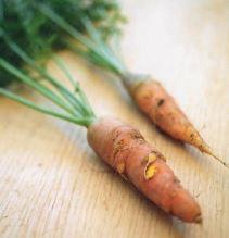 Touchon sans coeur; Quelle: Das Lexikon der alten Gemüsesorten (2014)