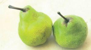 Trionfo di Packahm, fonte: P. Odorizzi: Profumi e sapori perduti - Il fascino della frutta antica Vol.II (2005)